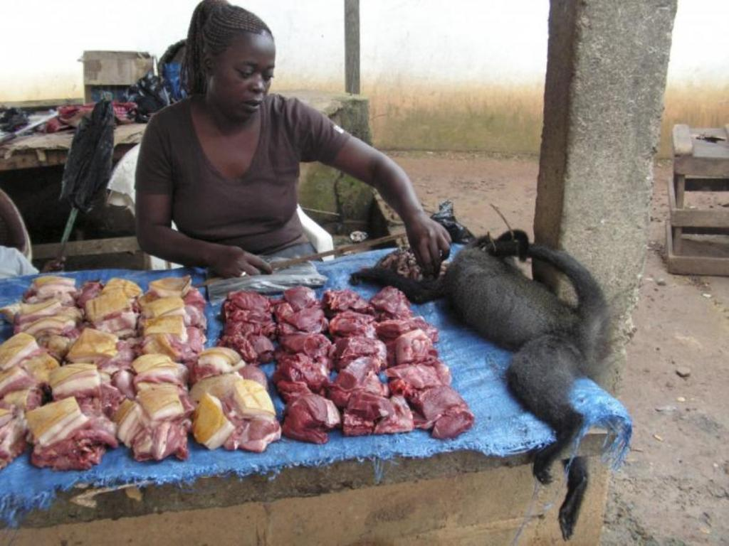 ♦ We should wear protective clothing while handling bushmeat and we have to cook it thoroughly before being eaten.