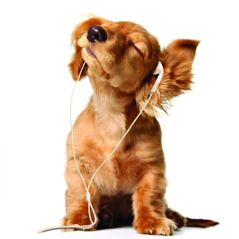 339432-dogs-music-dog