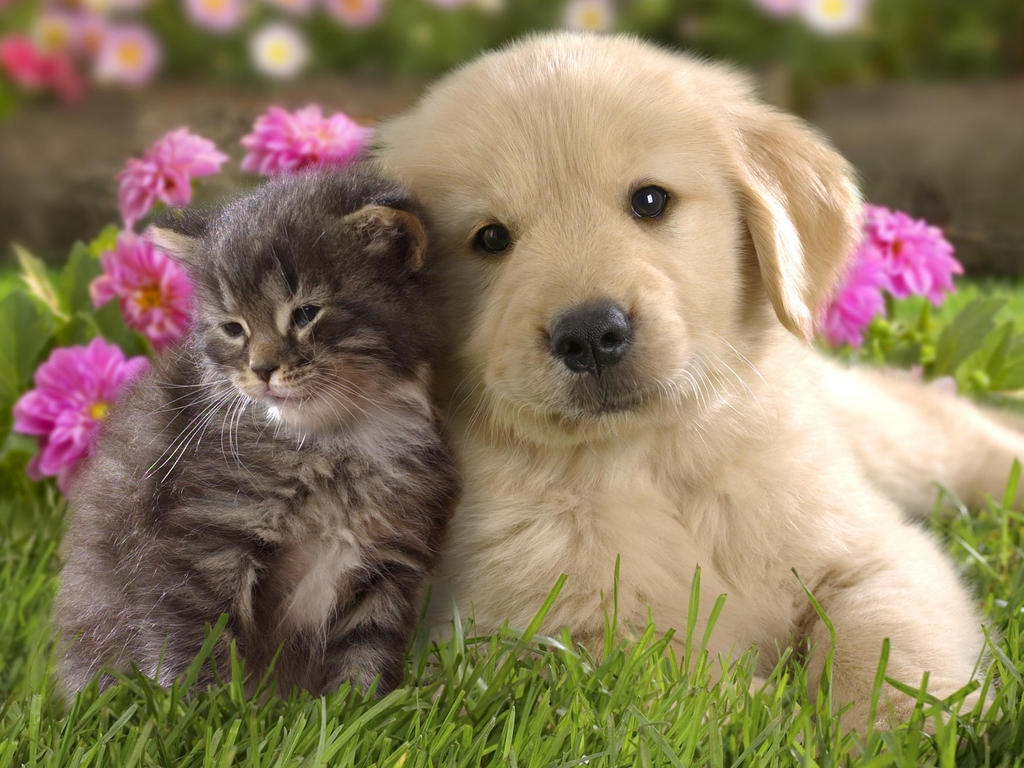 Cute-and-Funny-Puppy-and-Cat-in-The-Garden-HD-Wallpaper