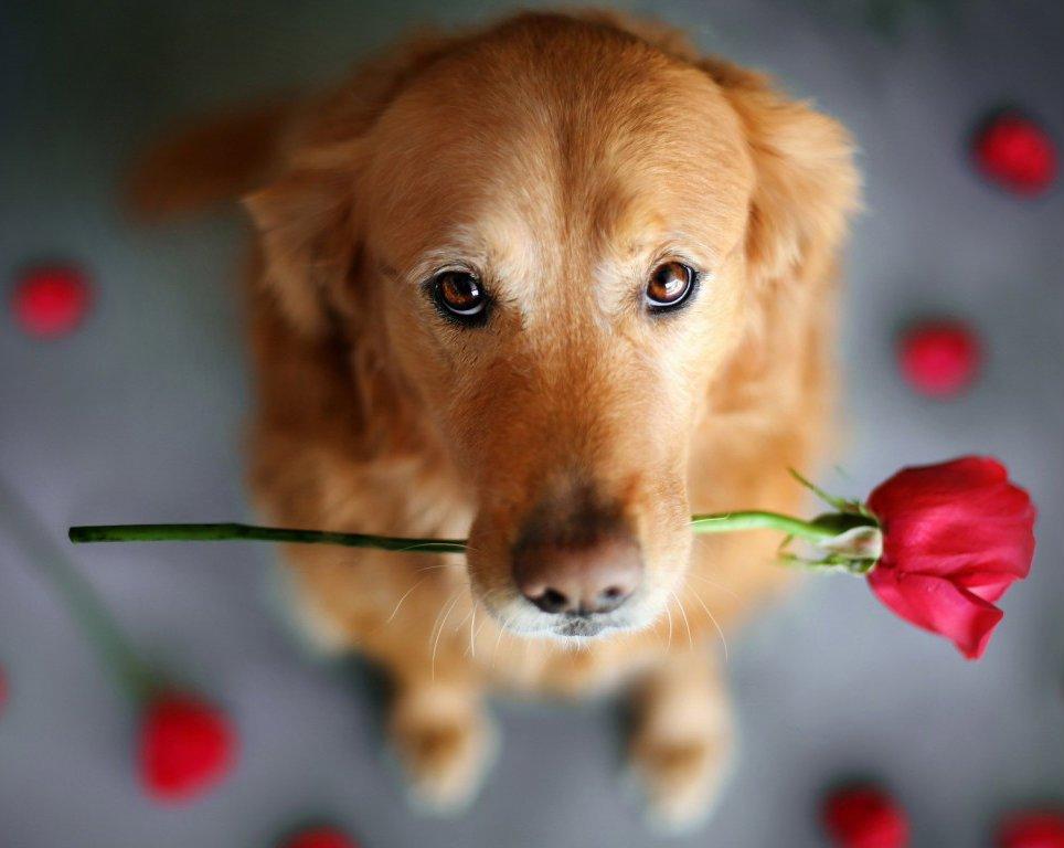cute-dog-dogs-35538638-964-768