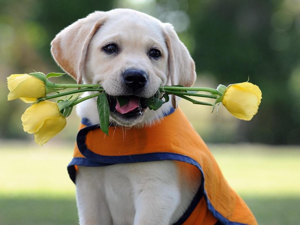 cute dogs 30
