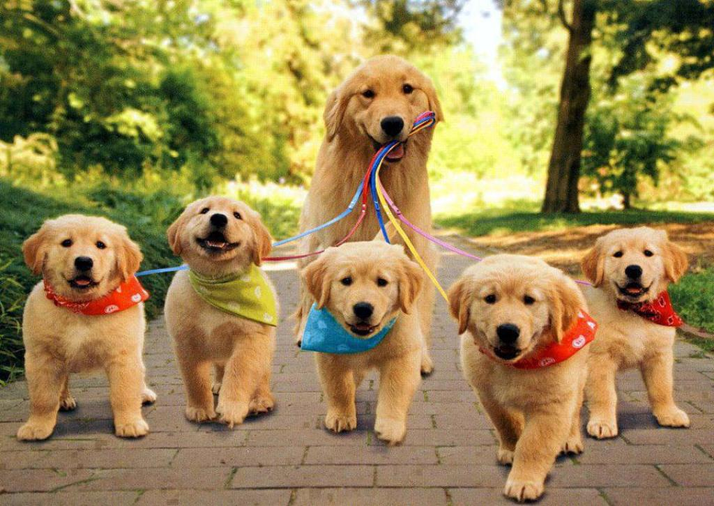 extremely-cute-puppies-gallery_1406001580