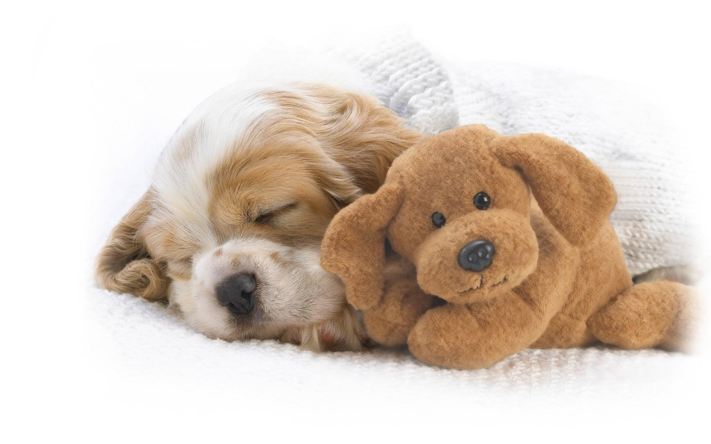 pictures-of-cute-puppies-sleeping-hd-cool-7