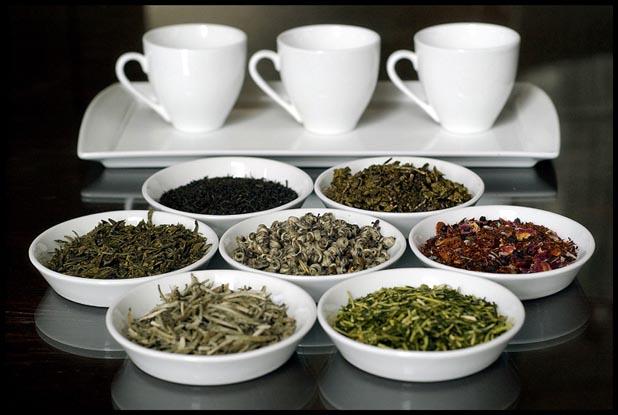 basic varieties in tea field