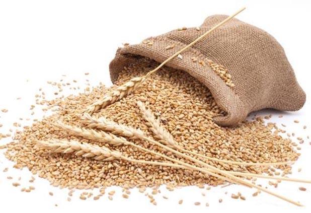 corn and wheat