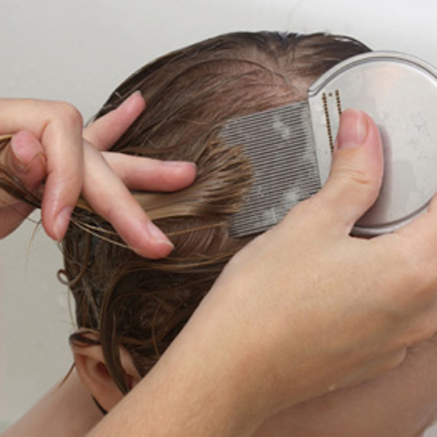 Dividing the hair during putting the essential oil