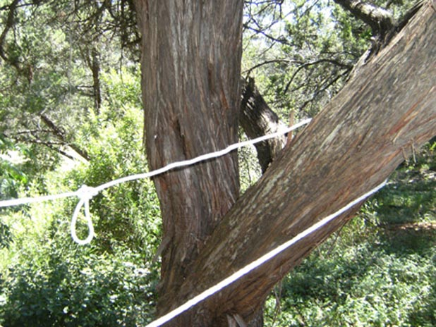 Tying a rope around a tree
