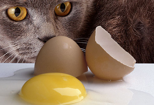 Raw food that your cat might like
