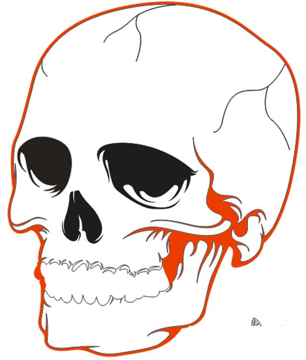 A full skull drawing