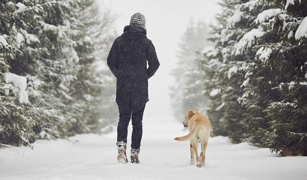 Photo of How to Walk Safely in the Winter Season