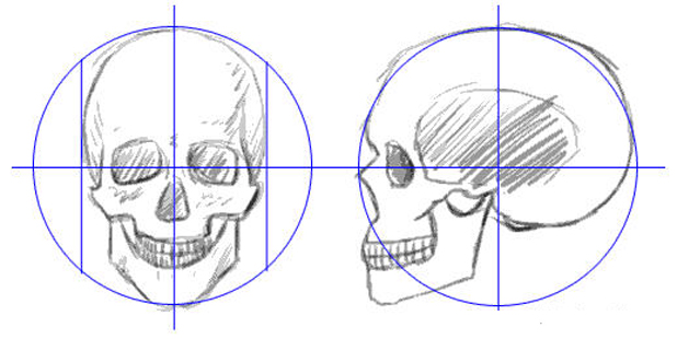 The lines for selecting each part of the skull