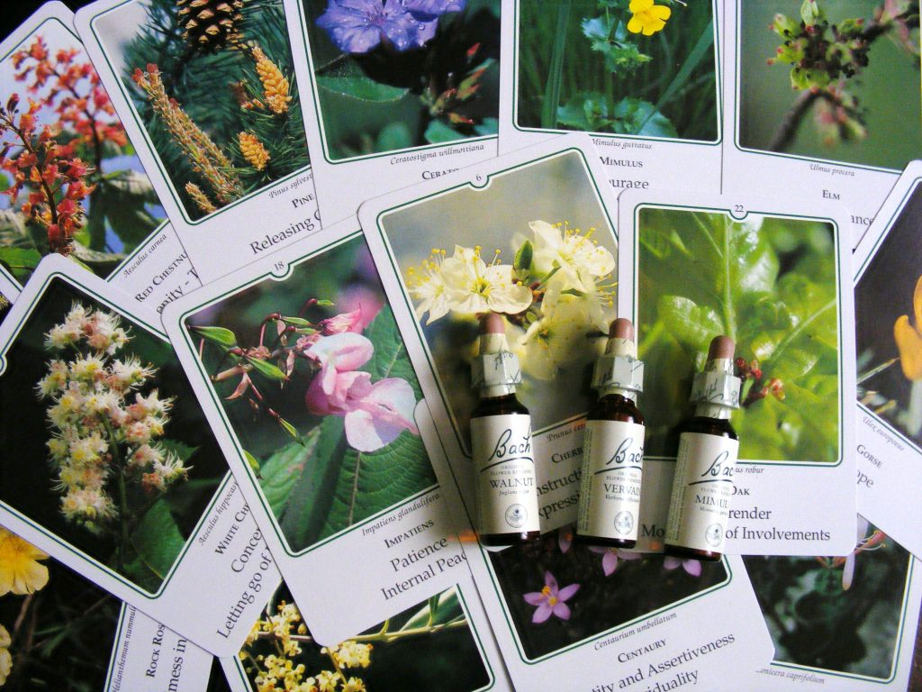 Photo of Bach Flower: Their Top Benefits on Your Health