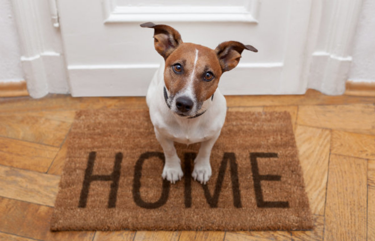Photo of 10 Tips to Pick an Ear-catching Name for Your New Dog